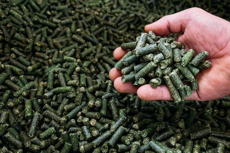 aliments pour chevaux avec des algues